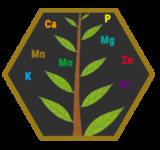 tree-hexagon
